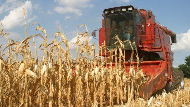 Photo of El maíz empieza a cerrar cosecha en 50 millones de toneladas