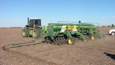 Photo of Girasol y trigo, afectados por la falta de lluvias