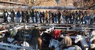 Photo of Martes en Liniers: Muy firme la vaca y sostenido el resto