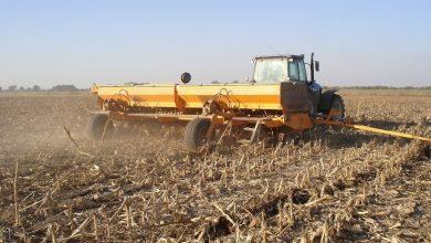 Photo of Creció el área de trigo en el sudoeste de Buenos Aires.