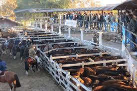Photo of Miércoles en Liniers: la plaza reflejó la dura situación de los mostradores