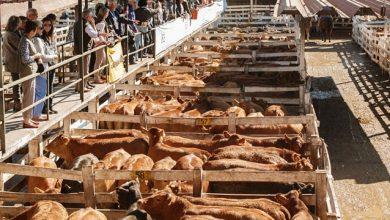Photo of Martes en Liniers: Por la presión en la vaca buena mejoró el novillo